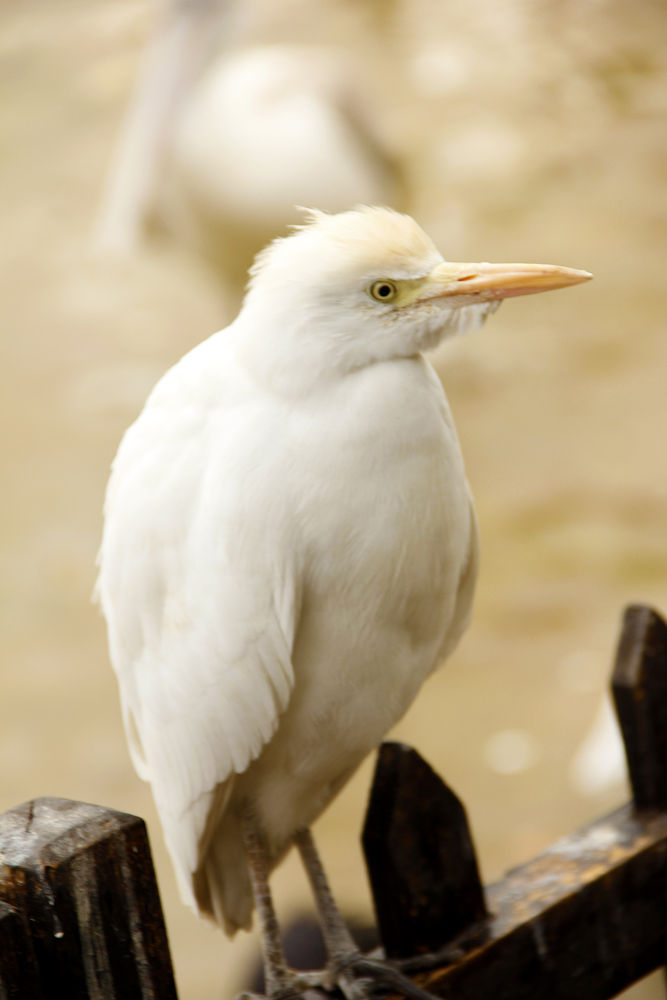 white bird by behzadhomayouninezhad