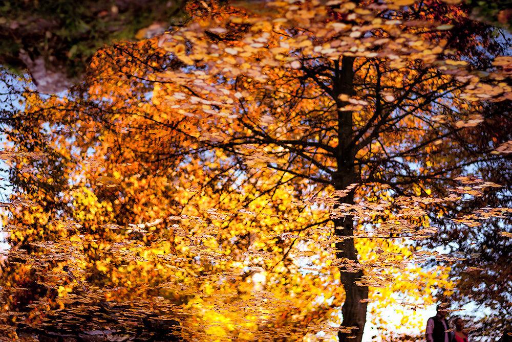 Autumn Mirrors by MladenKesic