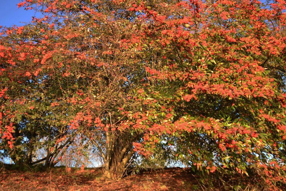 a What to say, it's a beautiful Tree by John Nijjar