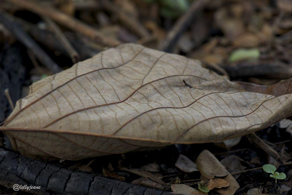 leaves by lellyjeane