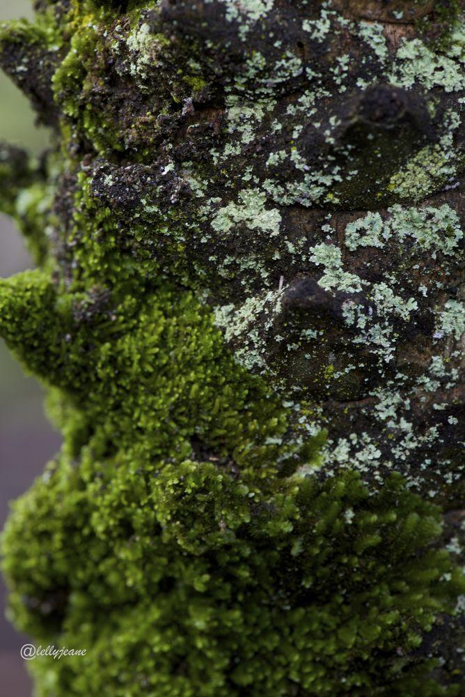 moss by lellyjeane