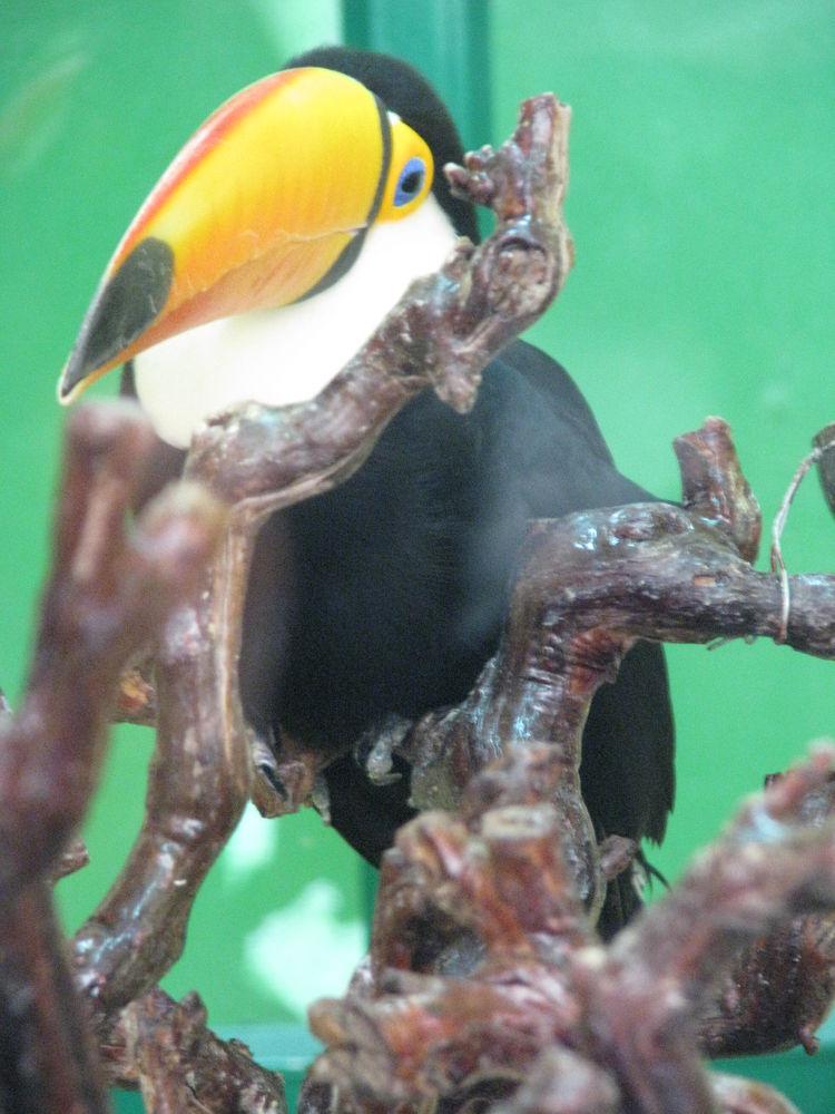 yellow beak by mahya