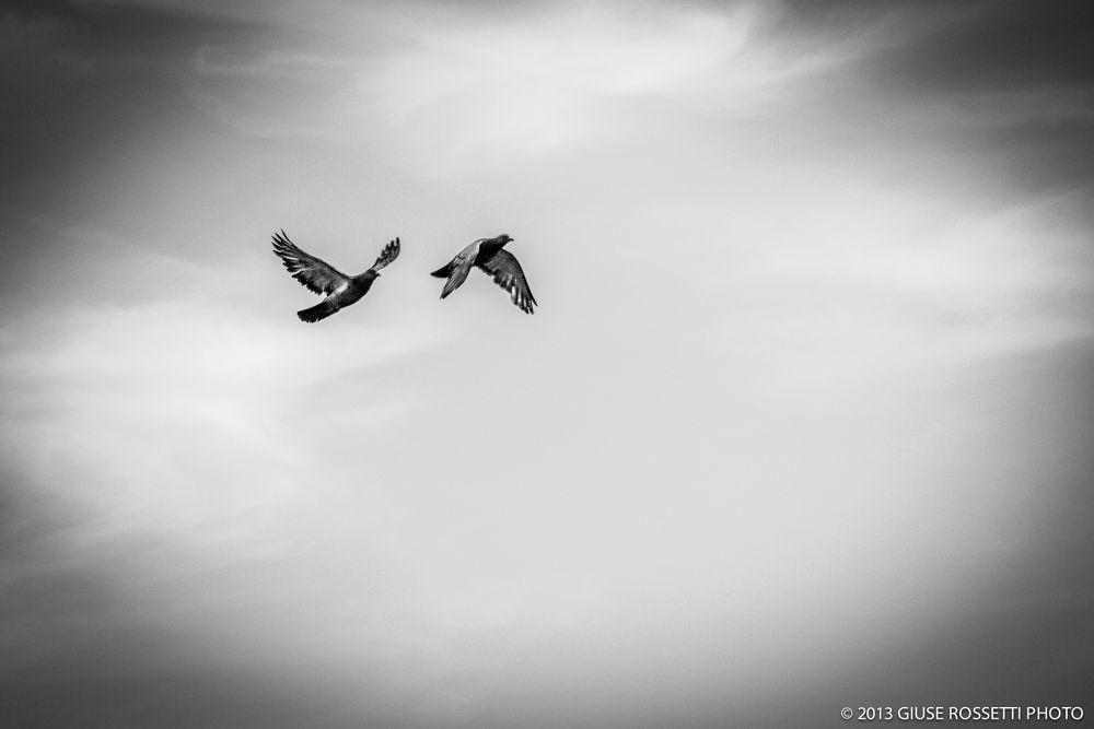 Friends in flight by Giuse Rossetti
