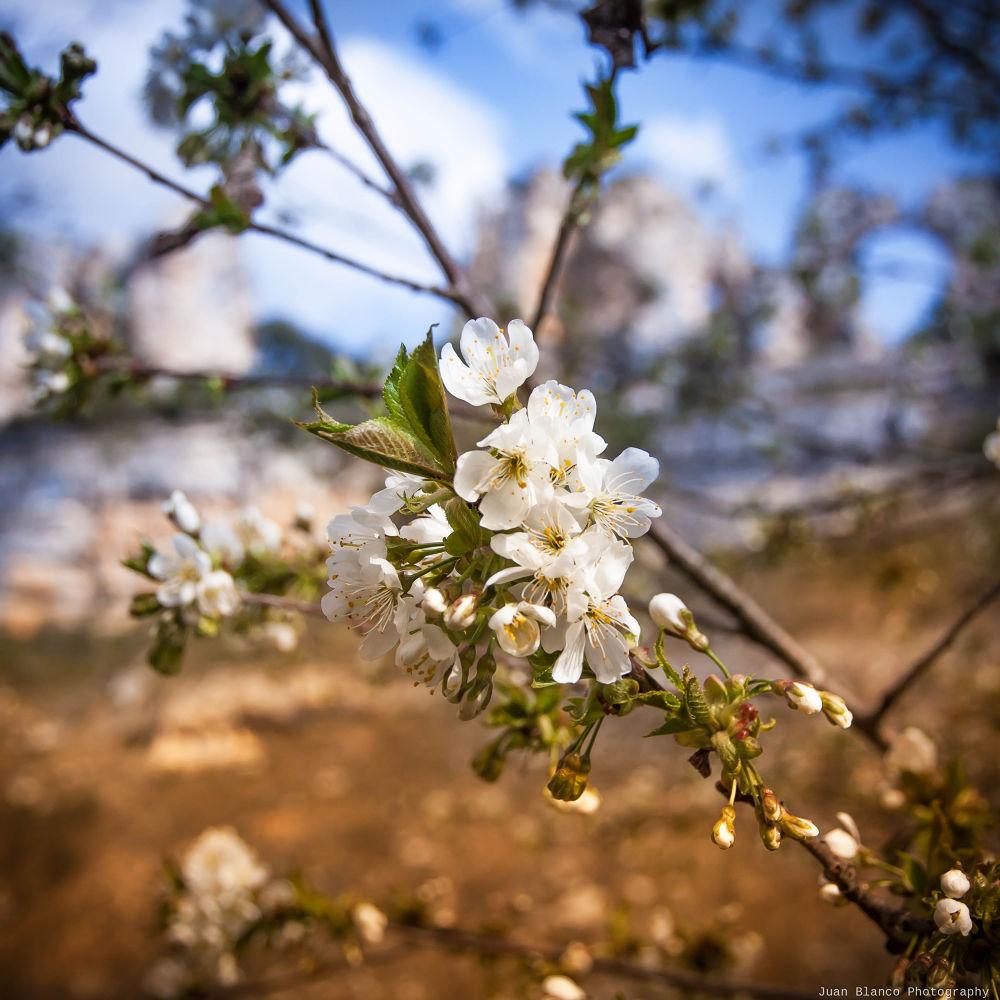 Almendro en flor by JuanBlancoPhotography