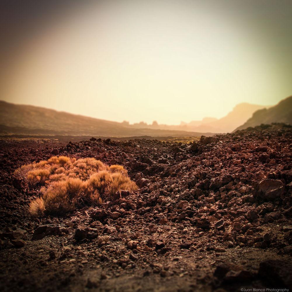 Parque Nacional del Teide. Tenerife by JuanBlancoPhotography