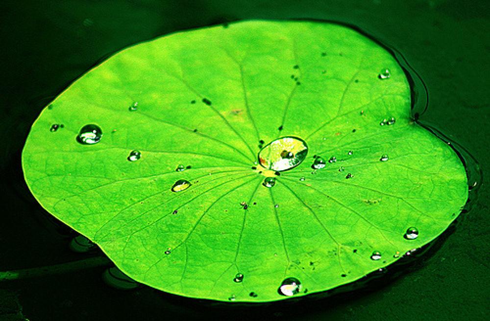 Leaf by fragranceumlee