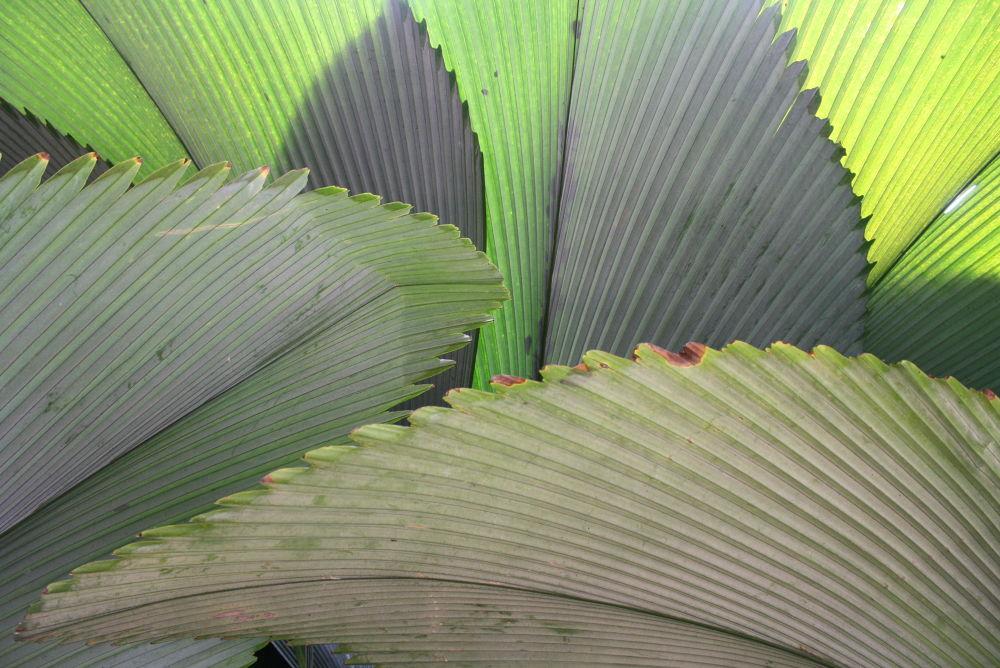 Big leaf by fragranceumlee