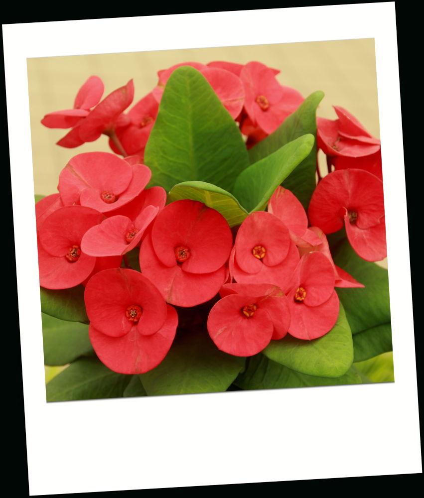 Red color flower by fragranceumlee
