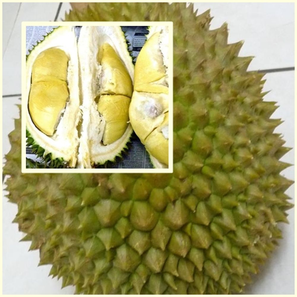 Malaysian durian ( well known as *King of the fruit*) by fragranceumlee