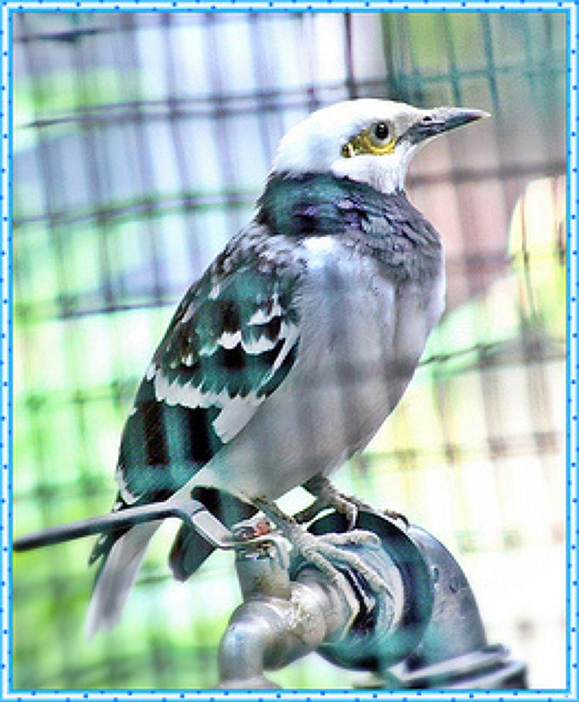 Bird by fragranceumlee