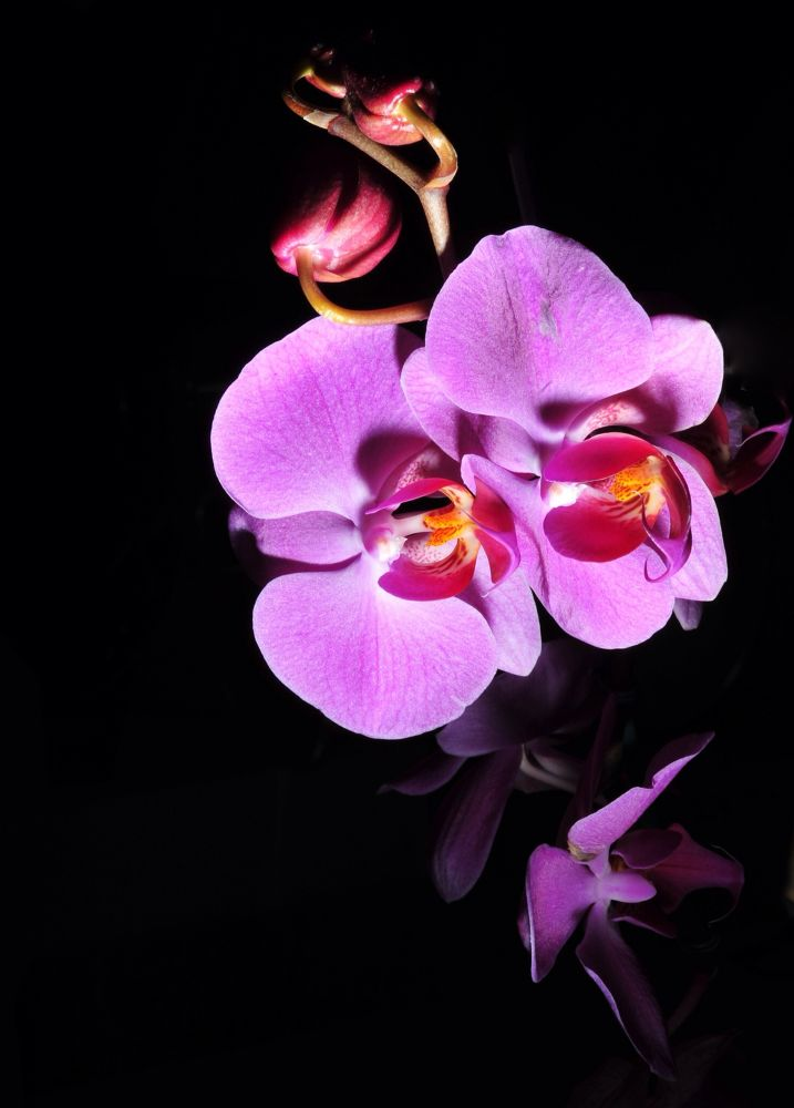 MY ORCHIDS by claudineifortes