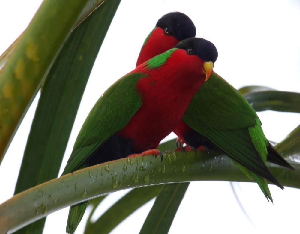 Photo in Animal #birds in fiji