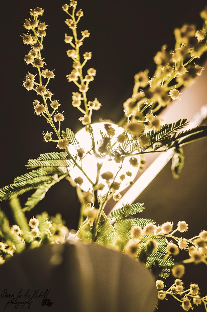 Flowers in the light by Irena McGregor