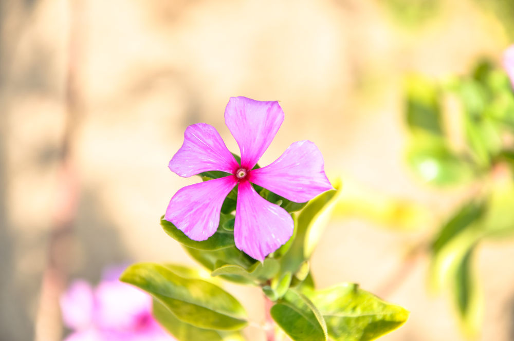Flor by Everton Chaves