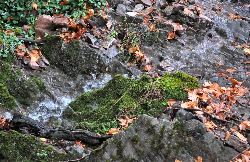 Fall by carolekarmona