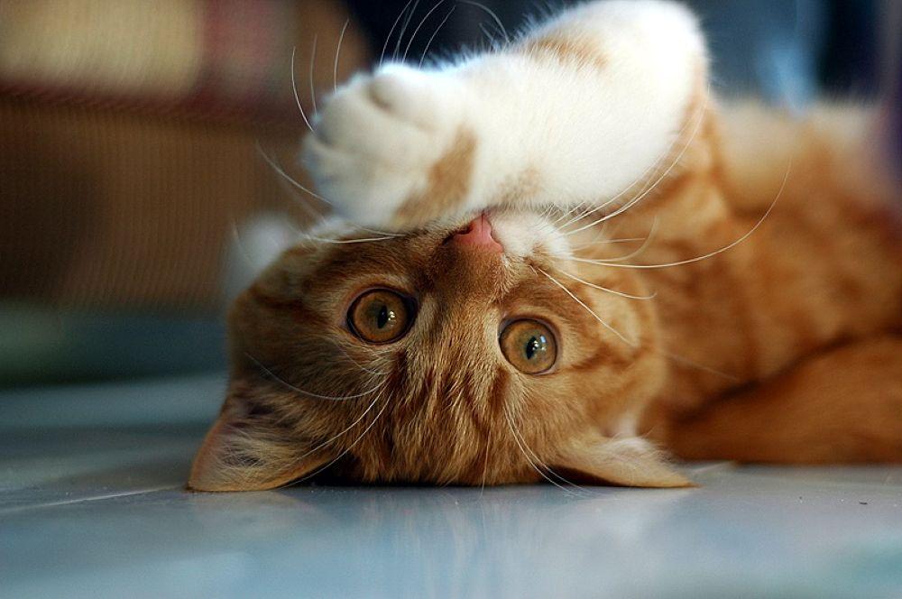 kedi by tuncay özdal