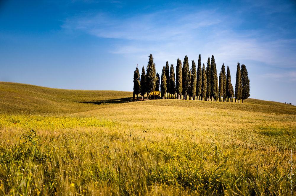 the cypresses by giannimattonai