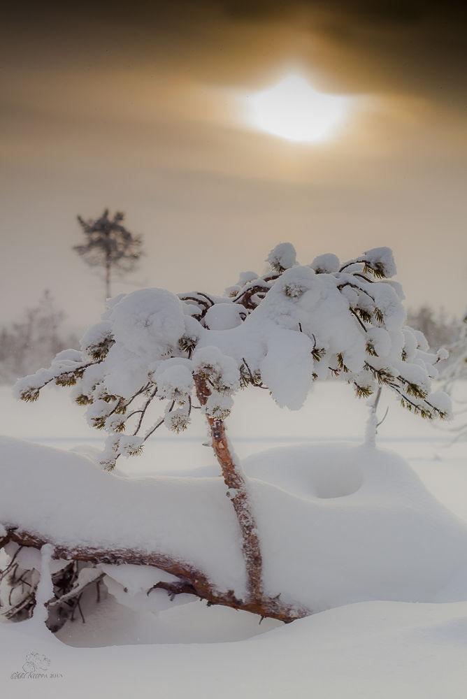 Winter in Finnish lapland. by Ari Niippa