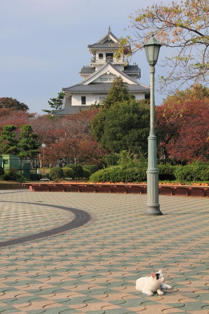 Nagahamajou castle in Shiga,Japan by Manabu