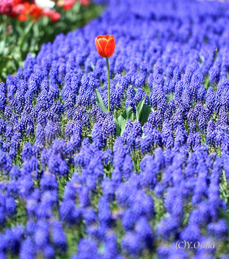 a red in blue by Yoshimasa Osaki