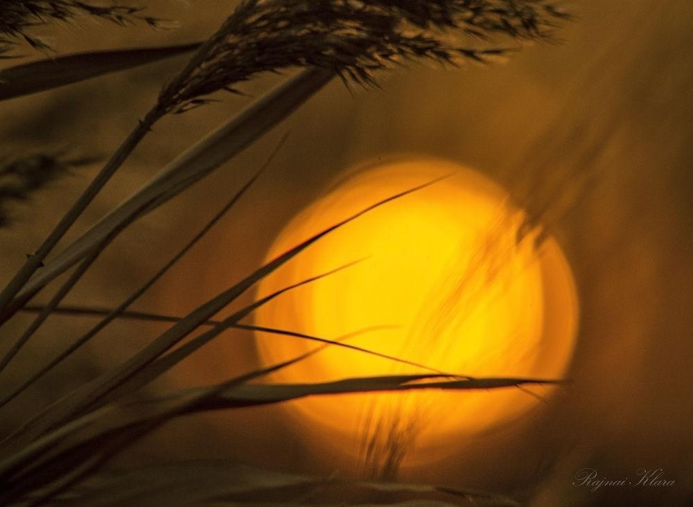 Winter Sun by rajnaiklara