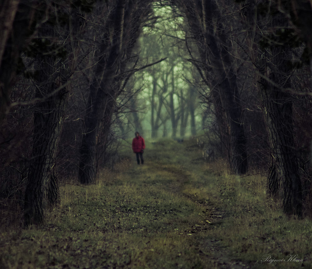 Photo in Landscape #forest #alone #nature