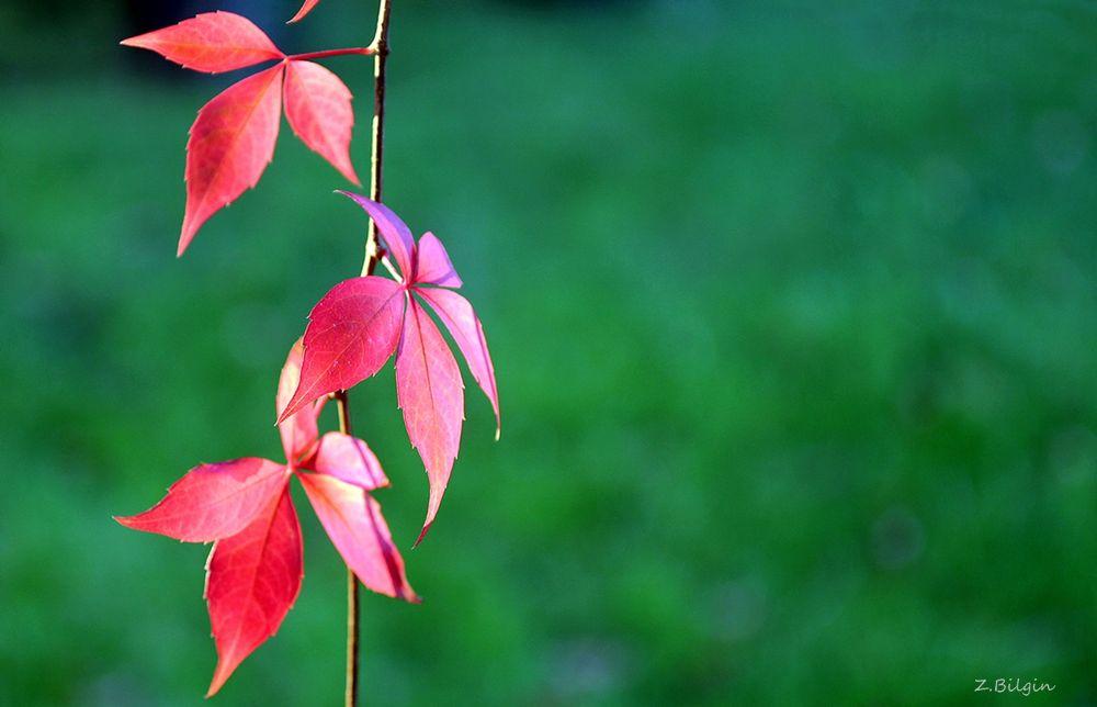 now the season is autumn.. by zekibilgin