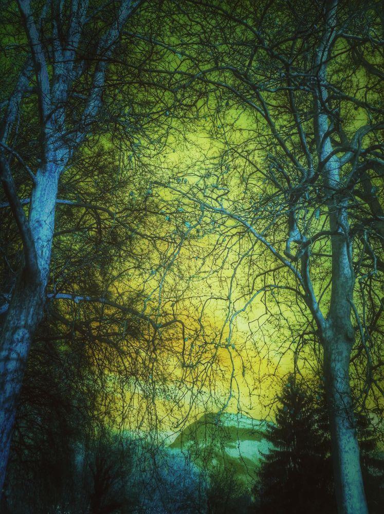 Le pays des arbres bleus by miminepo