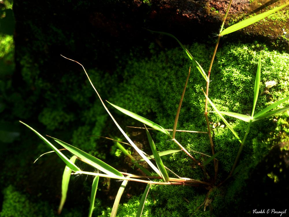 Grassy Algae !!! by Visakh C Parayil