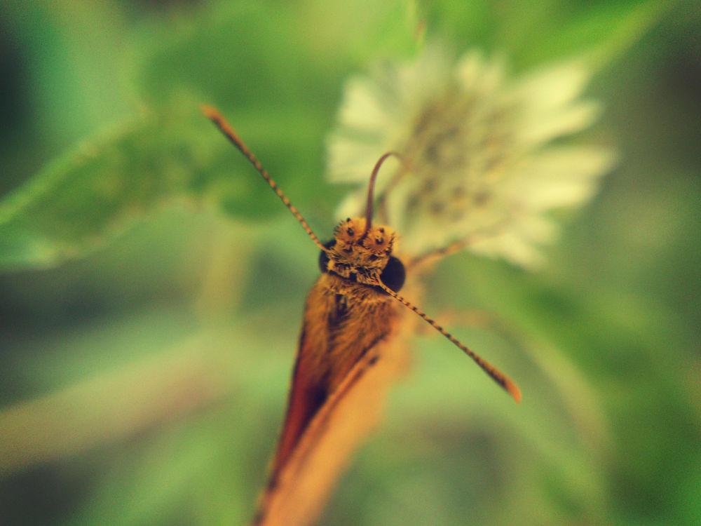 Butterfly by Visakh C Parayil