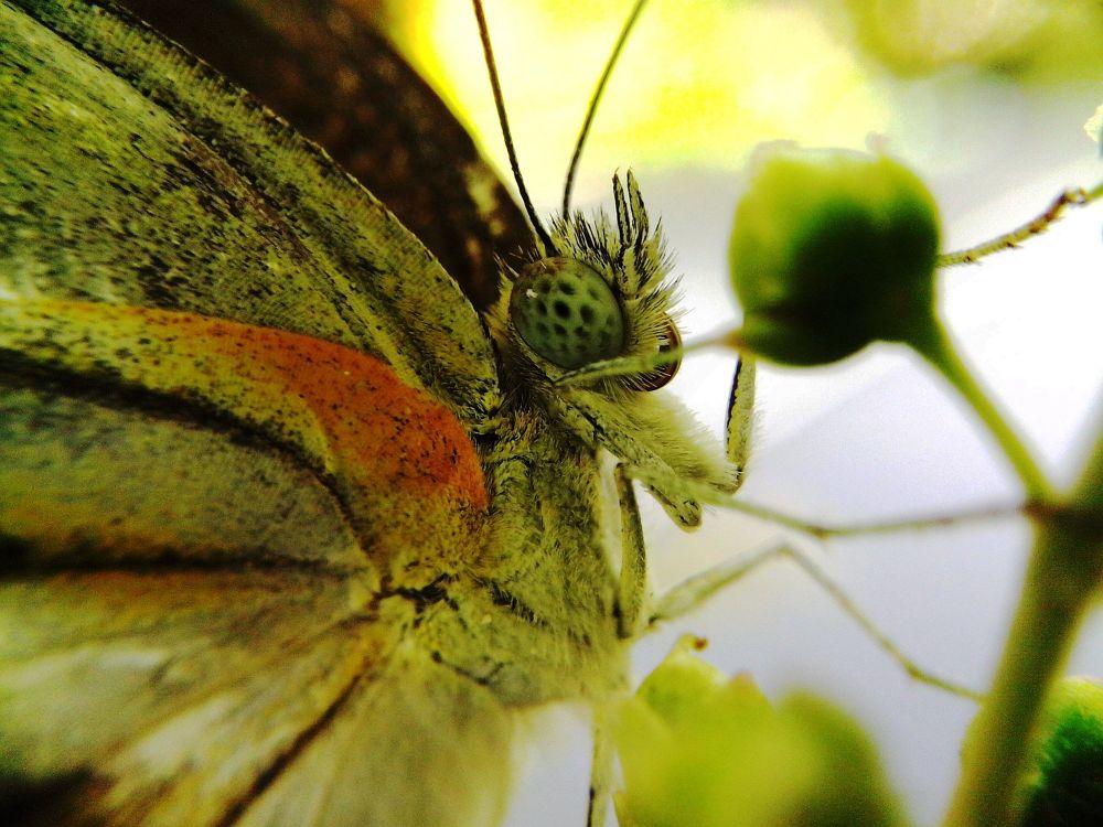 Butterfly by aries soeprapto