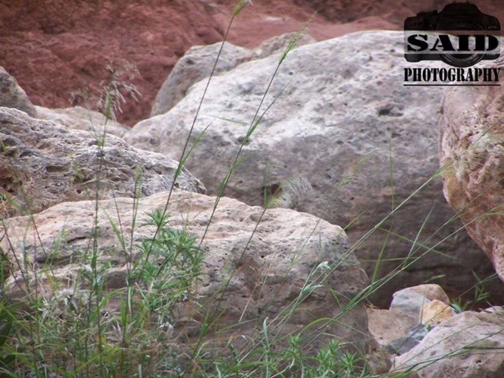 Rocks by Different man