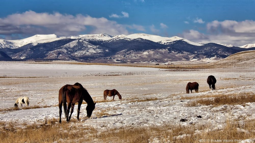 Home On The Range by Rosalie Visions Photography