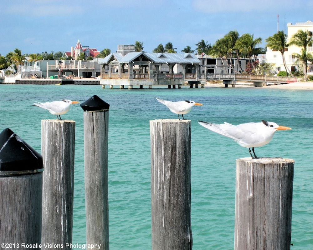 Guardians of Key West by Rosalie Visions Photography