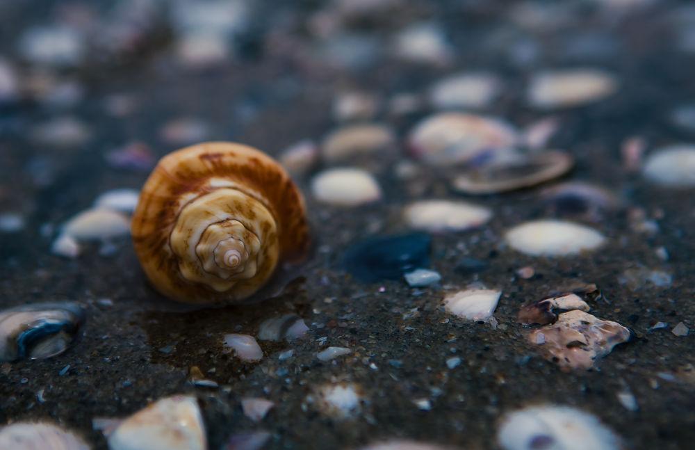 Photo in Random #sea #shell #macro #water