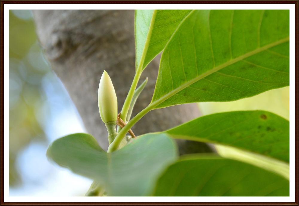 Hoa Ngọc lan by hoangthainguyen75054