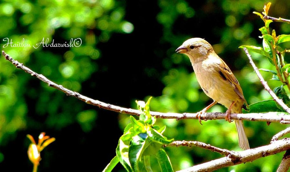 nice bird by Haithm Aldarwish