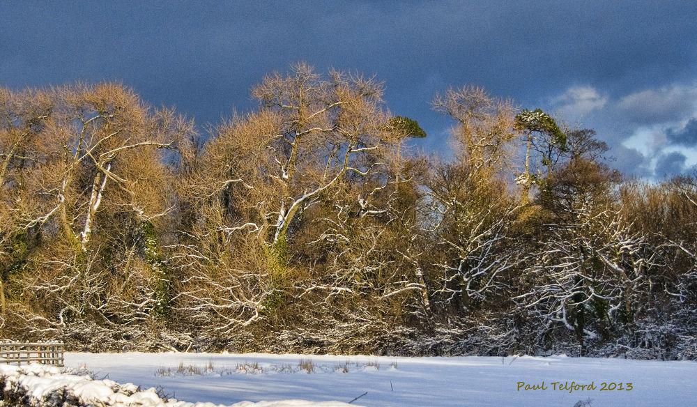 Snow Veins by Paul Telford