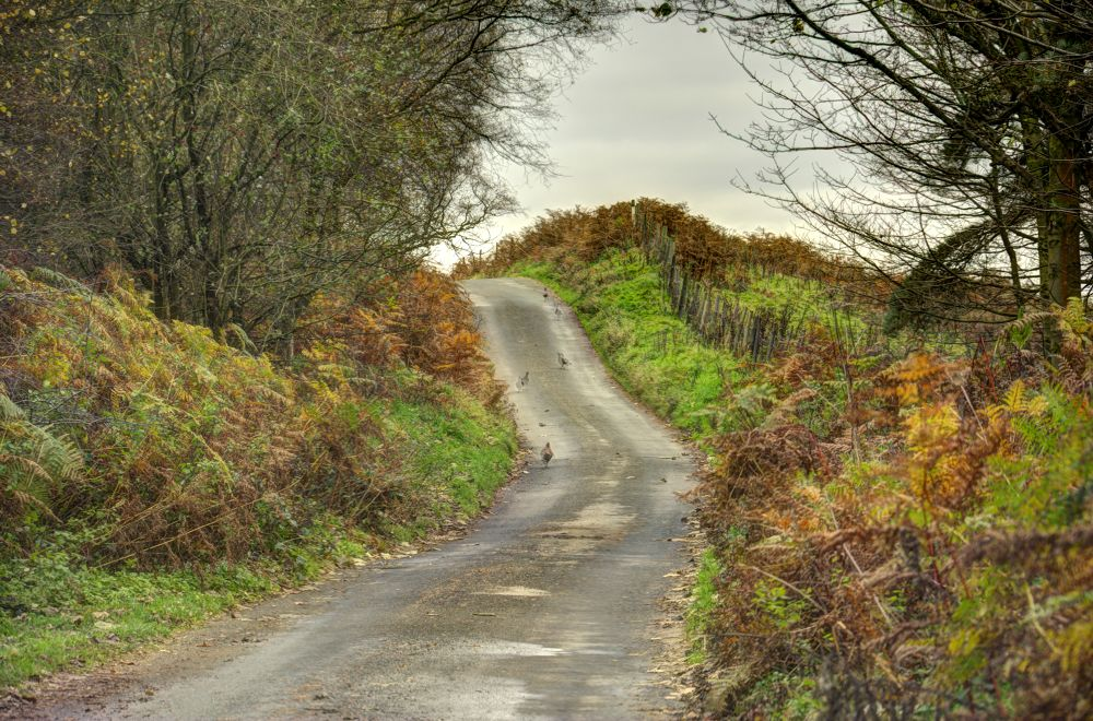 Road to Autumn by Paul Telford