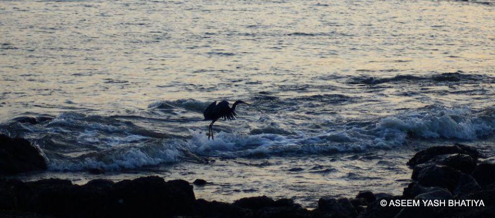 the jump. by aseemyb