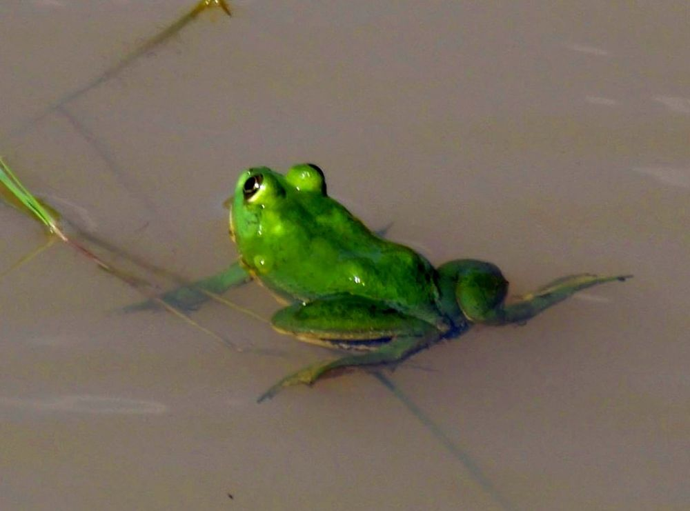 frog enhanced by Chris Roughley