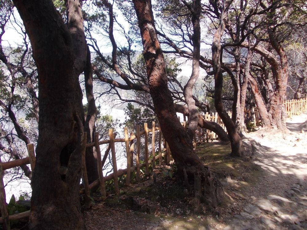 trees by putrasetyawan942