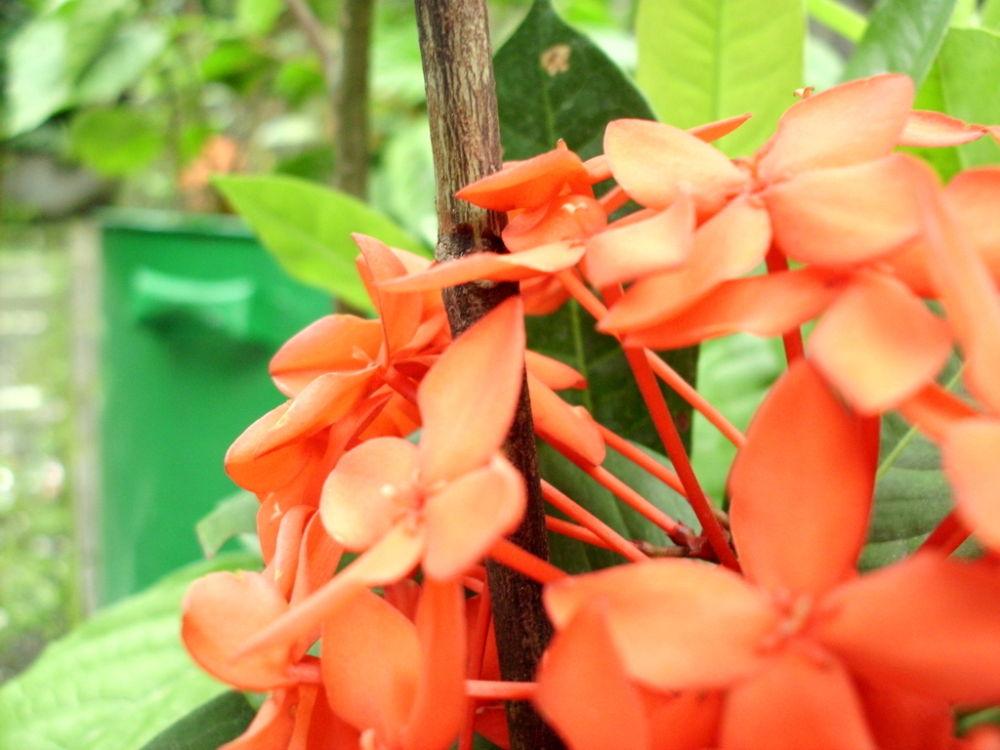 sweet red by putrasetyawan942