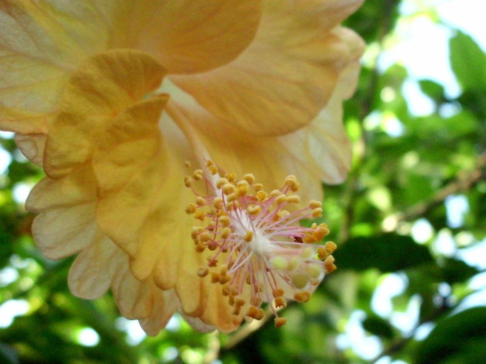 the part of flowers by putrasetyawan942