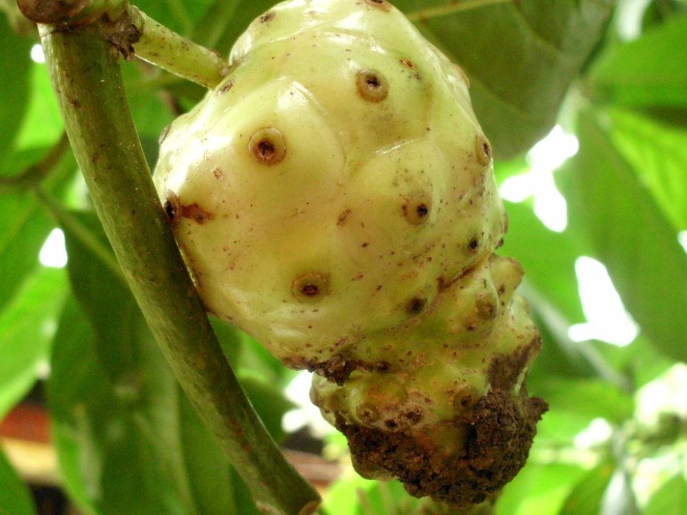 stranger fruit by putrasetyawan942