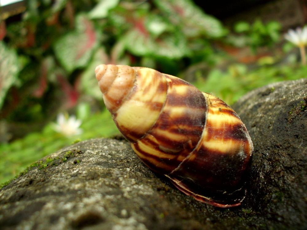 molusca by putrasetyawan942