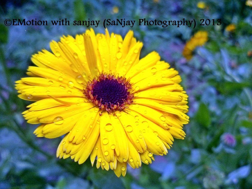 drops on yellow pankhudi by Sanjay Photography