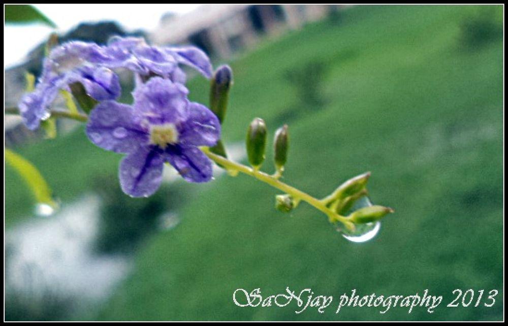 drops by Sanjay Photography