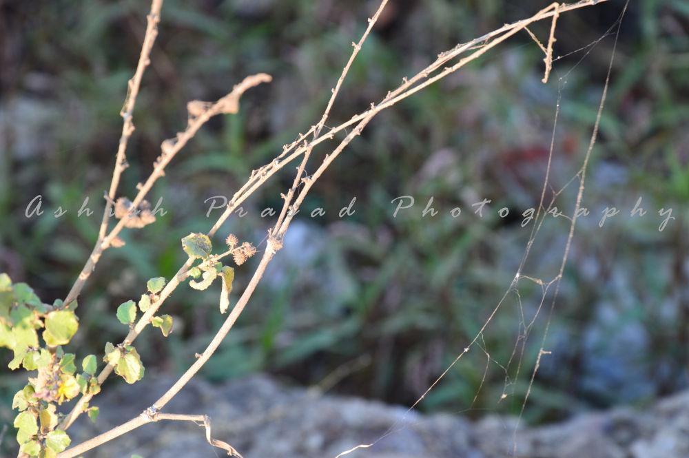 DSC_05934 by Ashish Prasad