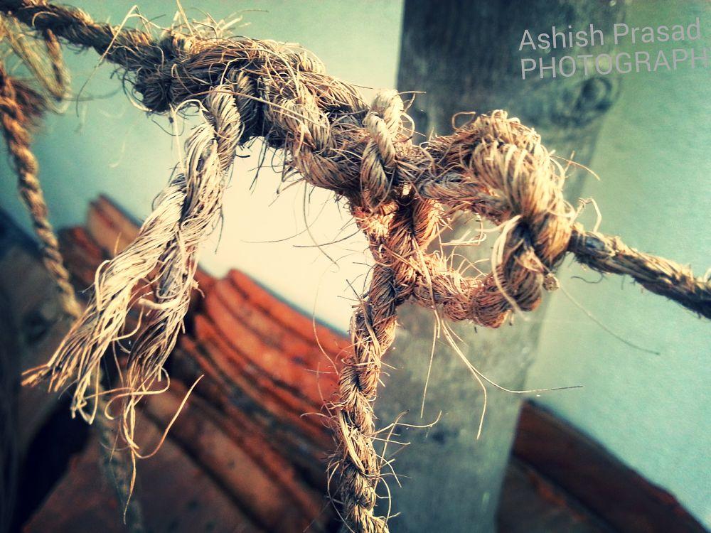 IMG_20131207_114414[1] by Ashish Prasad